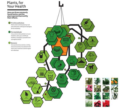 nasa air quality plants - photo #17